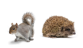 hedgehog-and-squirrel