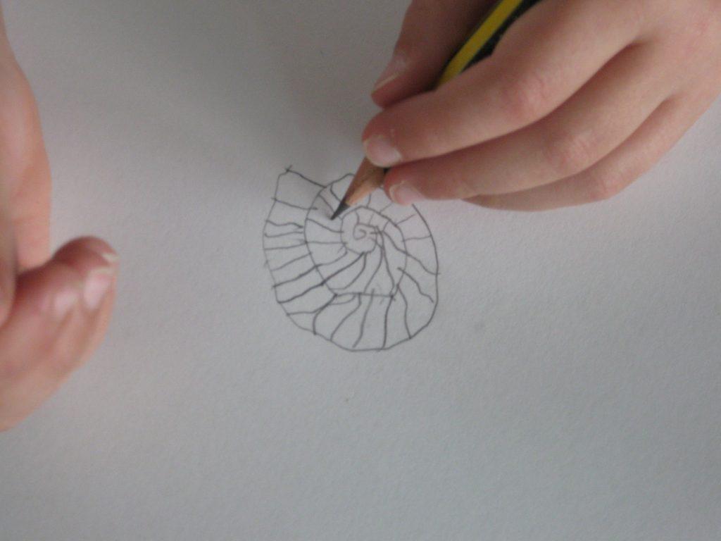 illustrator-5